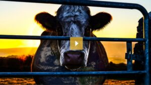 cowspiracy be vege
